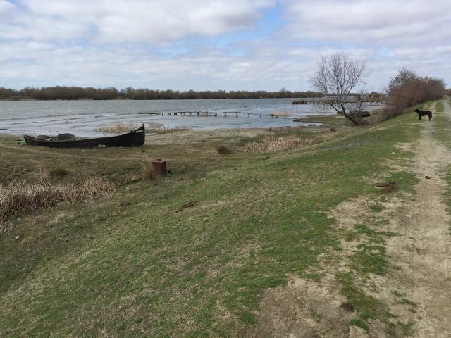 delta landscape 1.jpg