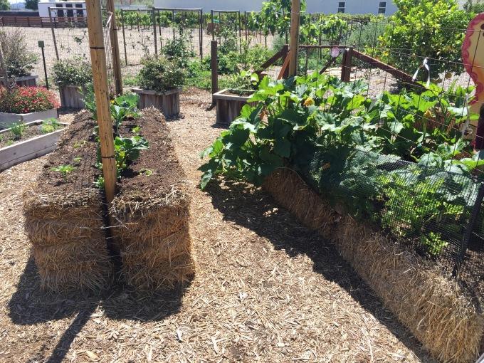 Straw bale garden.jpg